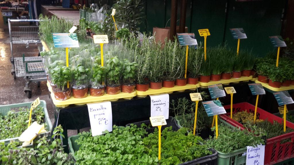 Rastliny na trhu